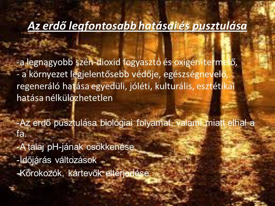 Az erdő legfontosabb hatásai és pusztulása