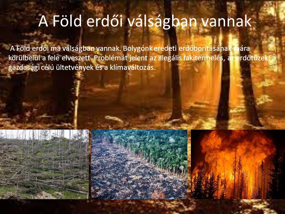 A Föld erdői válságban vannak