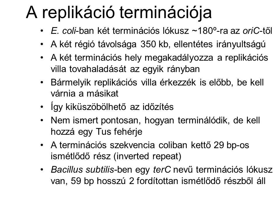 A replikáció terminációja