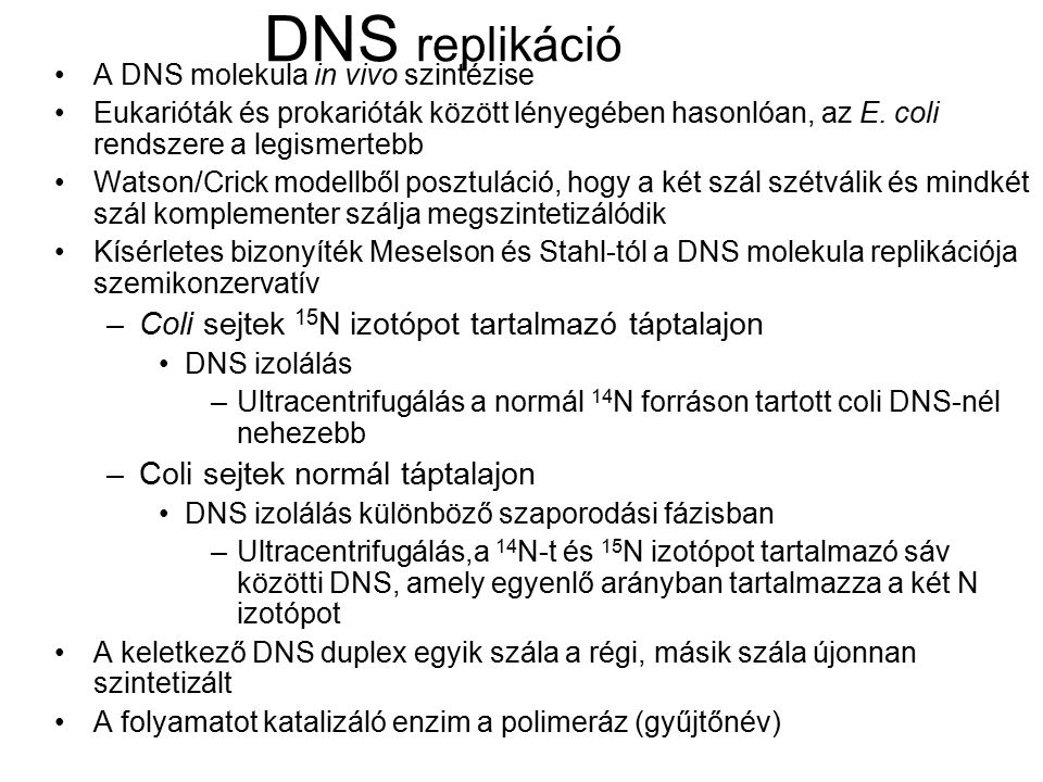 DNS replikáció Coli sejtek 15N izotópot tartalmazó táptalajon