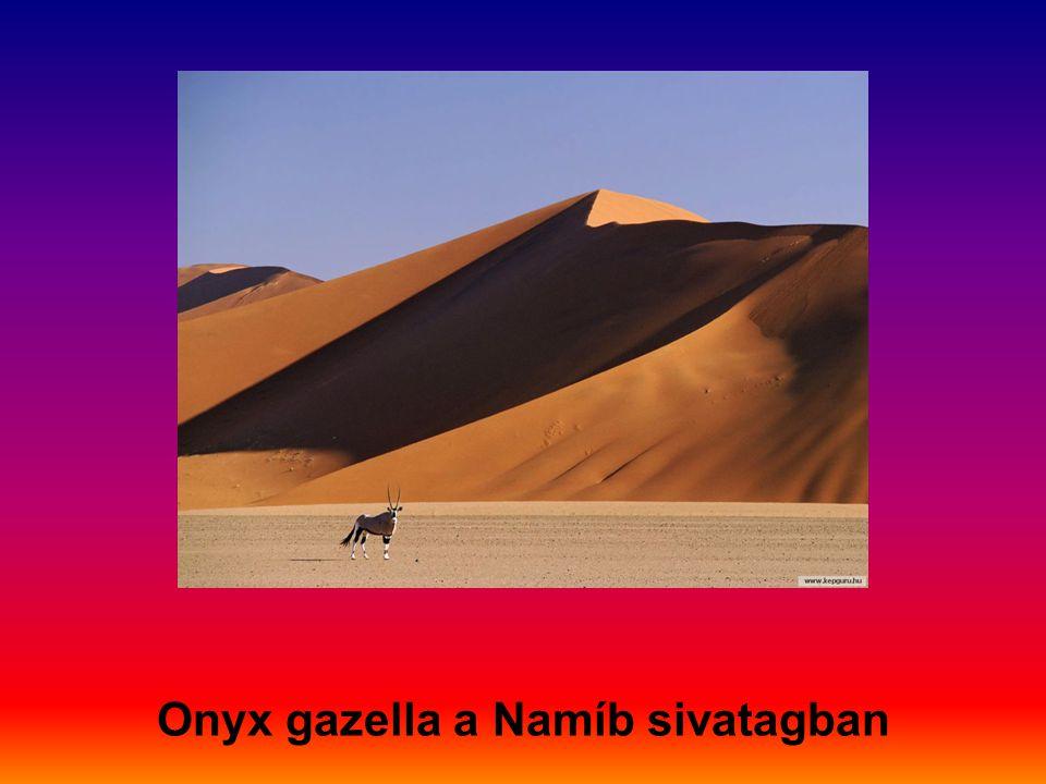 Onyx gazella a Namíb sivatagban