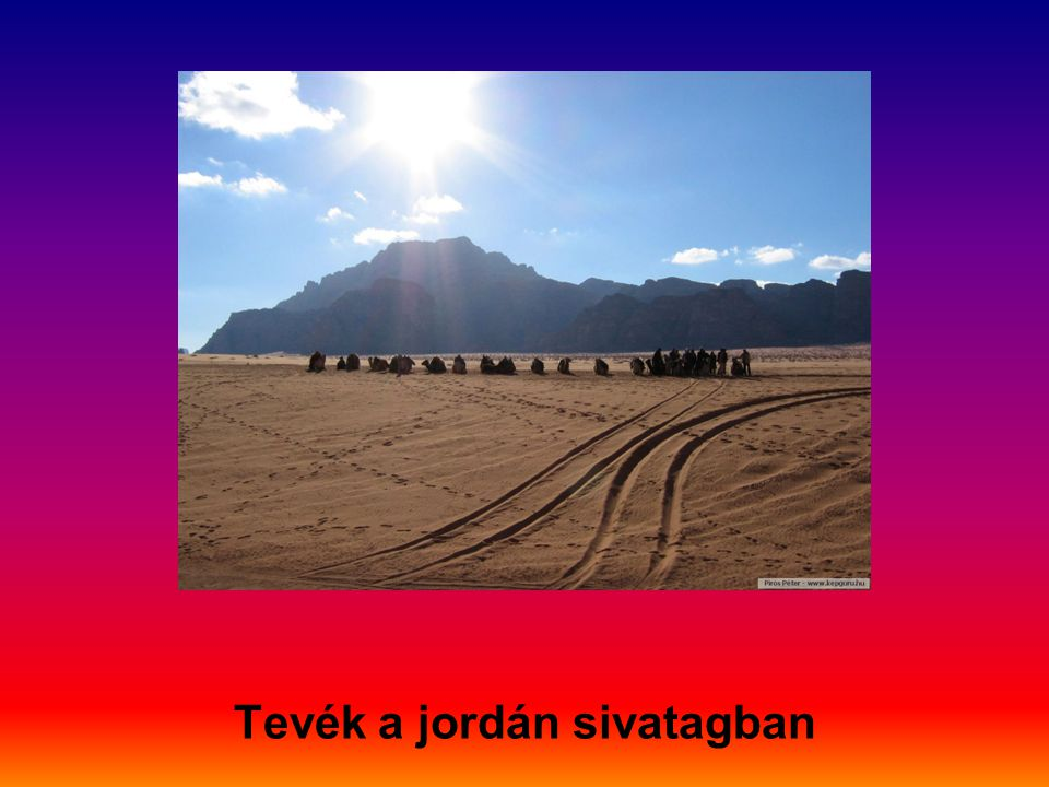 Tevék a jordán sivatagban
