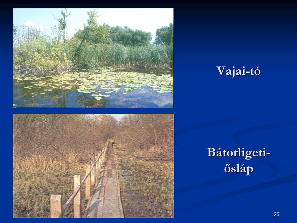 Vajai-tó Bátorligeti-ősláp