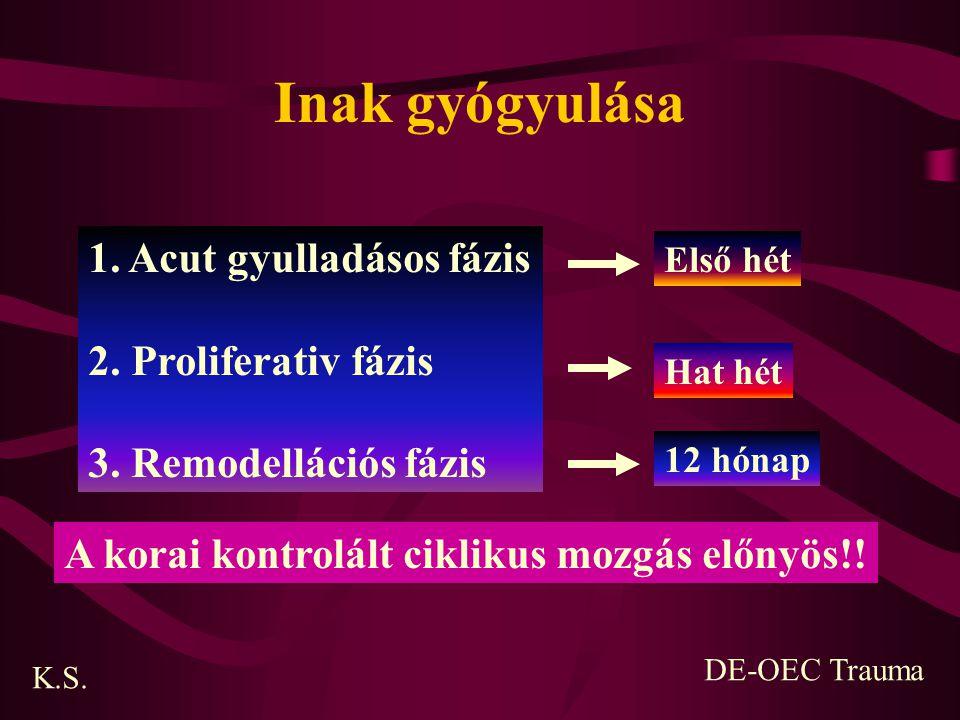 Inak gyógyulása 1. Acut gyulladásos fázis 2. Proliferativ fázis