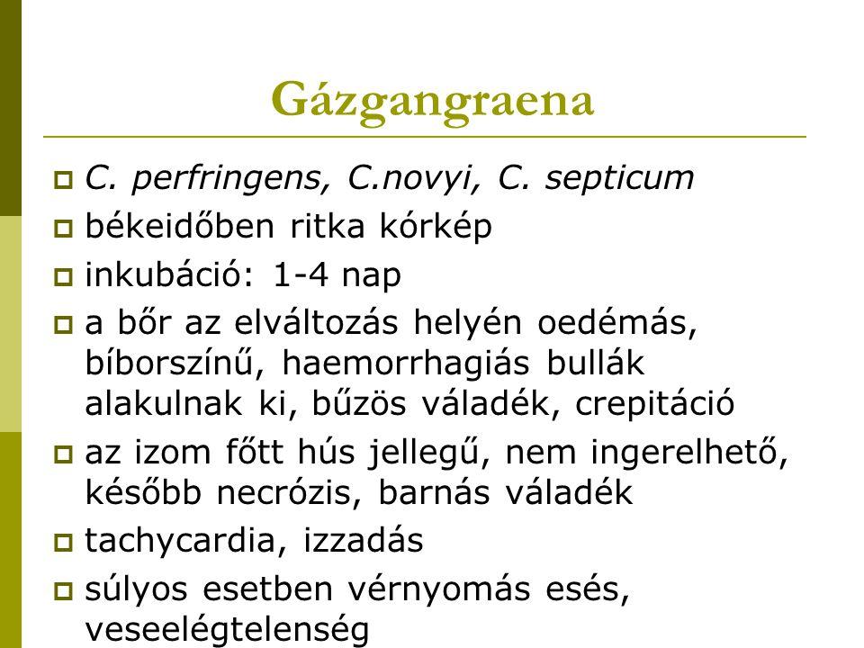 Gázgangraena C. perfringens, C.novyi, C. septicum