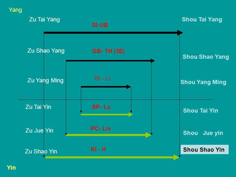 Yang Zu Tai Yang. Shou Tai Yang. SI-UB. Zu Shao Yang. GB- TH (3E) Shou Shao Yang. St - LI. Zu Yang Ming.