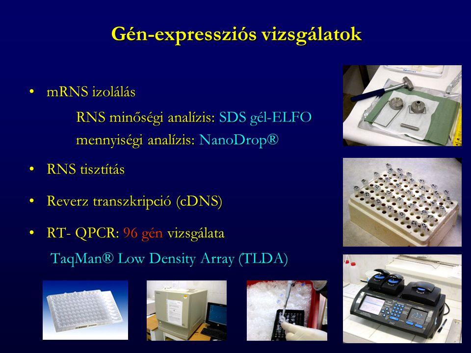 Gén-expressziós vizsgálatok