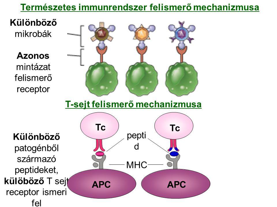 Természetes immunrendszer felismerő mechanizmusa