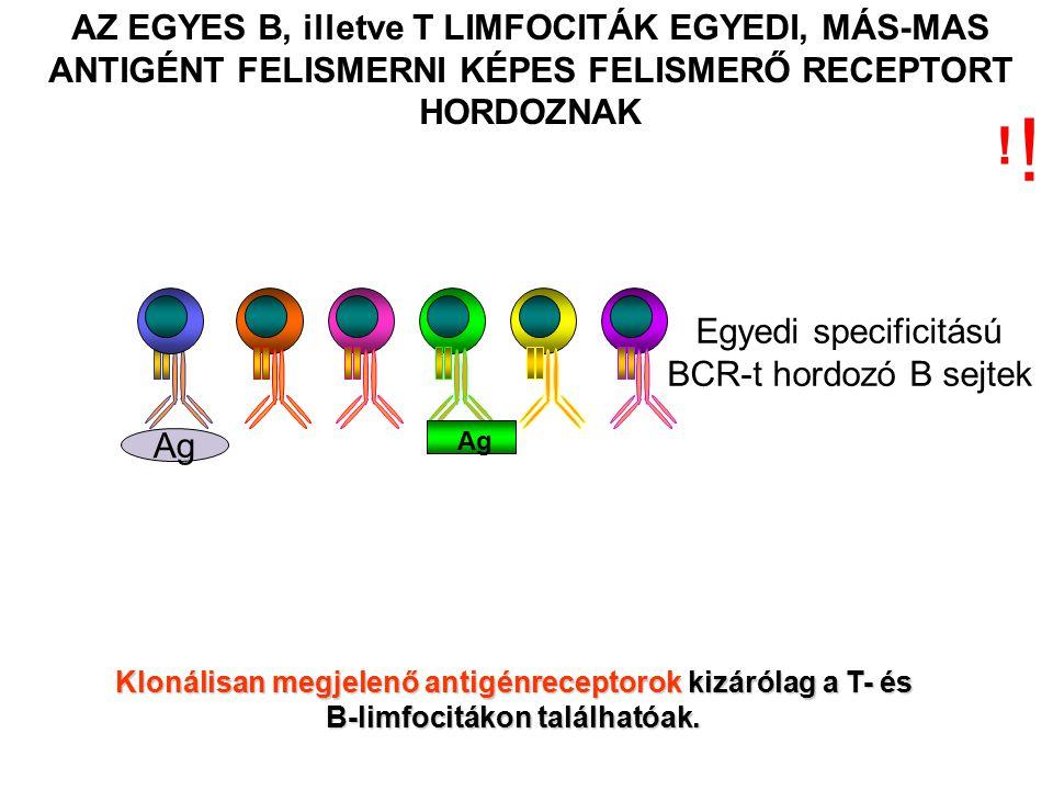 Egyedi specificitású BCR-t hordozó B sejtek