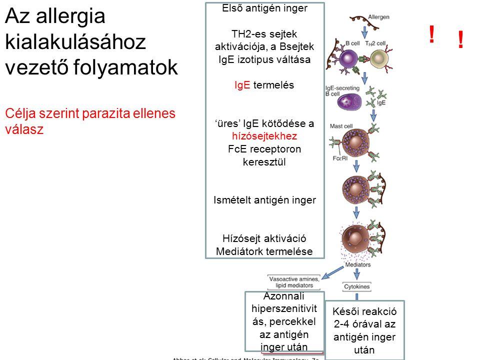 ! ! Az allergia kialakulásához vezető folyamatok