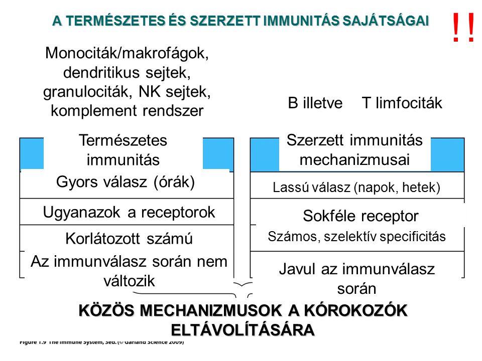 ! ! A TERMÉSZETES ÉS SZERZETT IMMUNITÁS SAJÁTSÁGAI. Monociták/makrofágok, dendritikus sejtek, granulociták, NK sejtek, komplement rendszer.