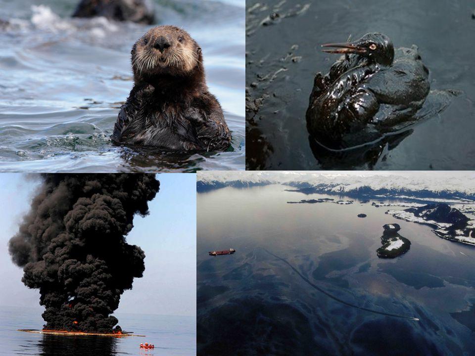 Exxon Valdez katasztrófája