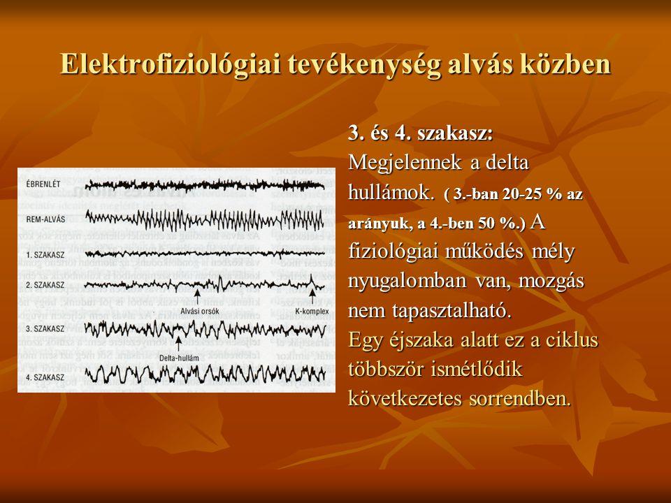 Elektrofiziológiai tevékenység alvás közben