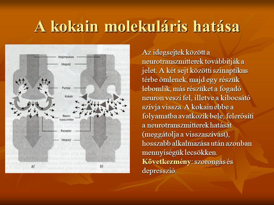 A kokain molekuláris hatása