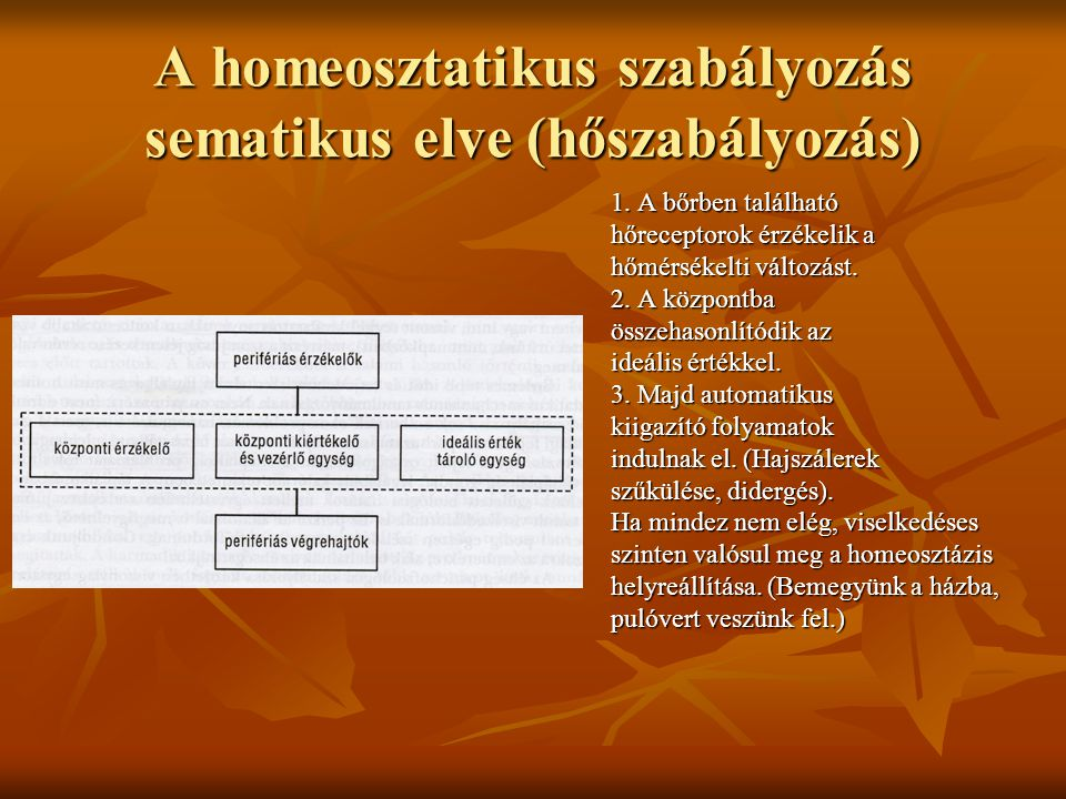 A homeosztatikus szabályozás sematikus elve (hőszabályozás)