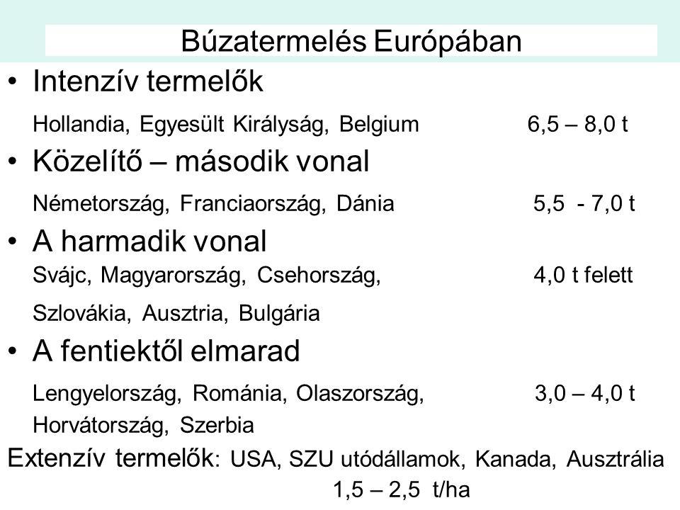 Búzatermelés Európában