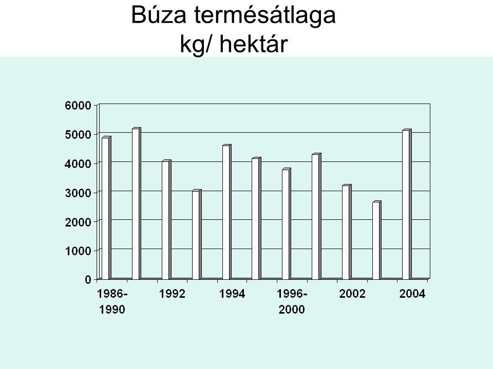 Búza termésátlaga kg/ hektár