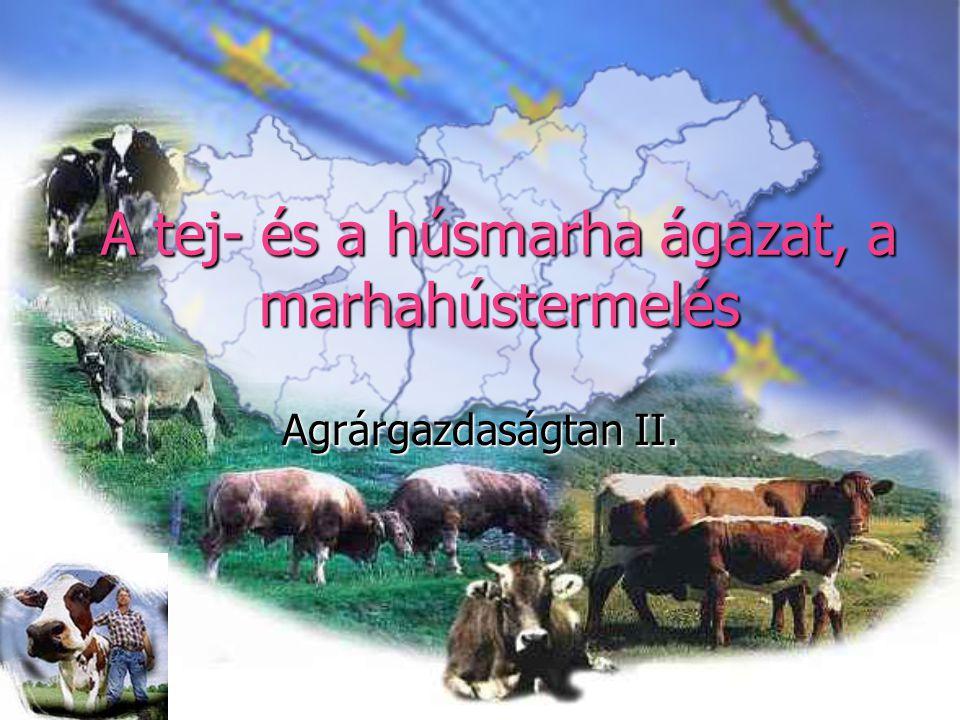 A tej- és a húsmarha ágazat, a marhahústermelés