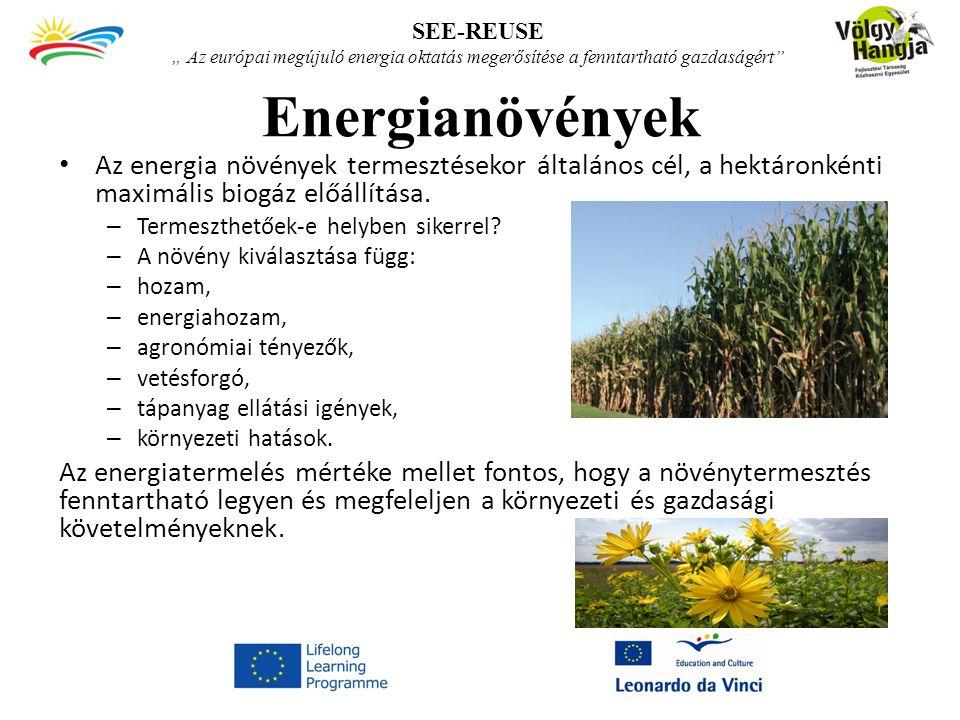 """SEE-REUSE """" Az európai megújuló energia oktatás megerősítése a fenntartható gazdaságért Energianövények."""