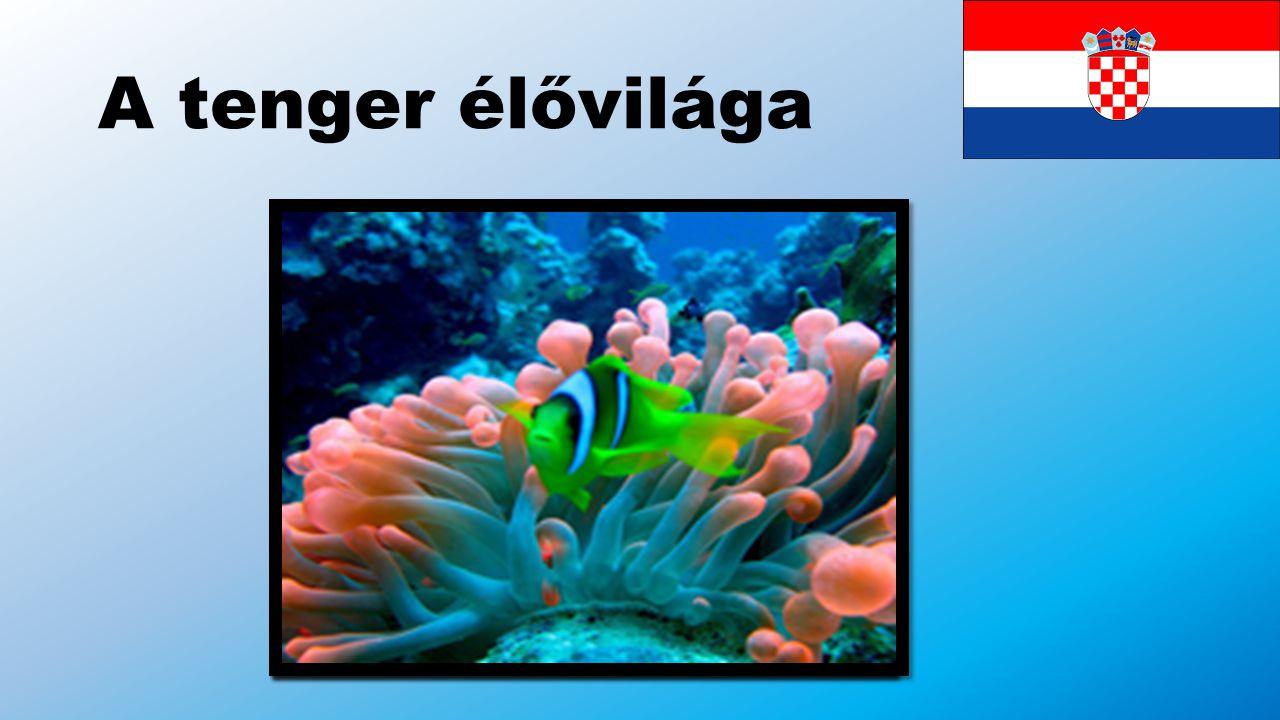 A tenger élővilága