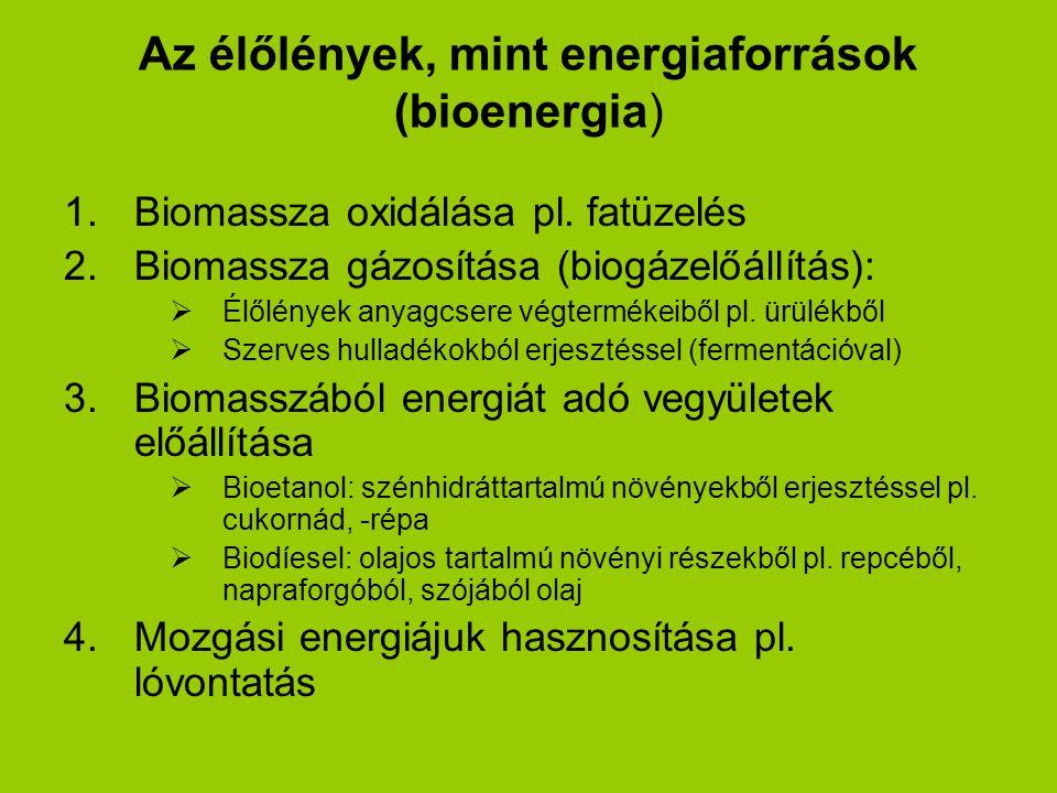 Az élőlények, mint energiaforrások (bioenergia)