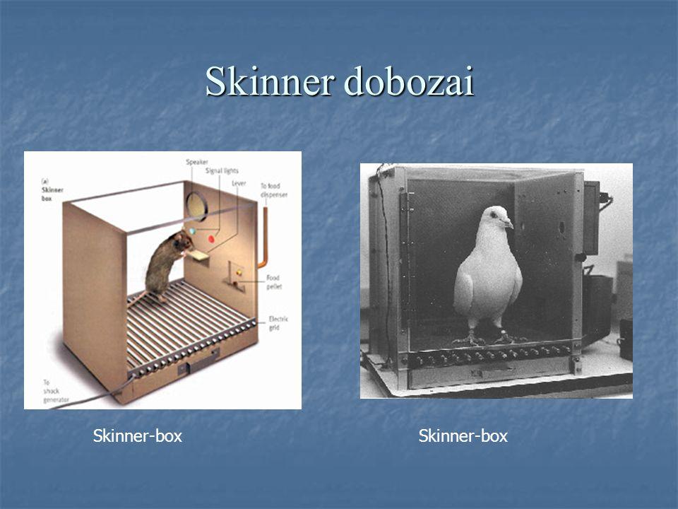 Skinner dobozai Skinner-box Skinner-box