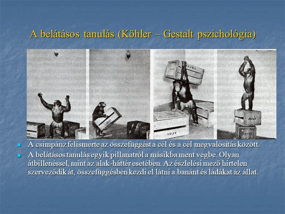 A belátásos tanulás (Köhler – Gestalt pszichológia)
