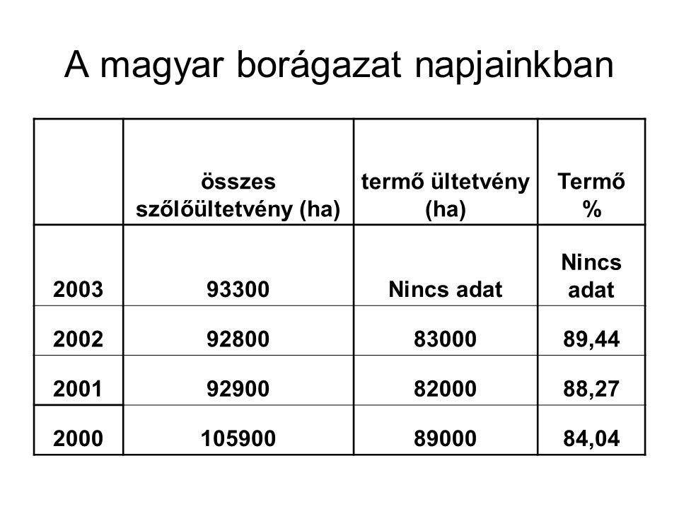 A magyar borágazat napjainkban