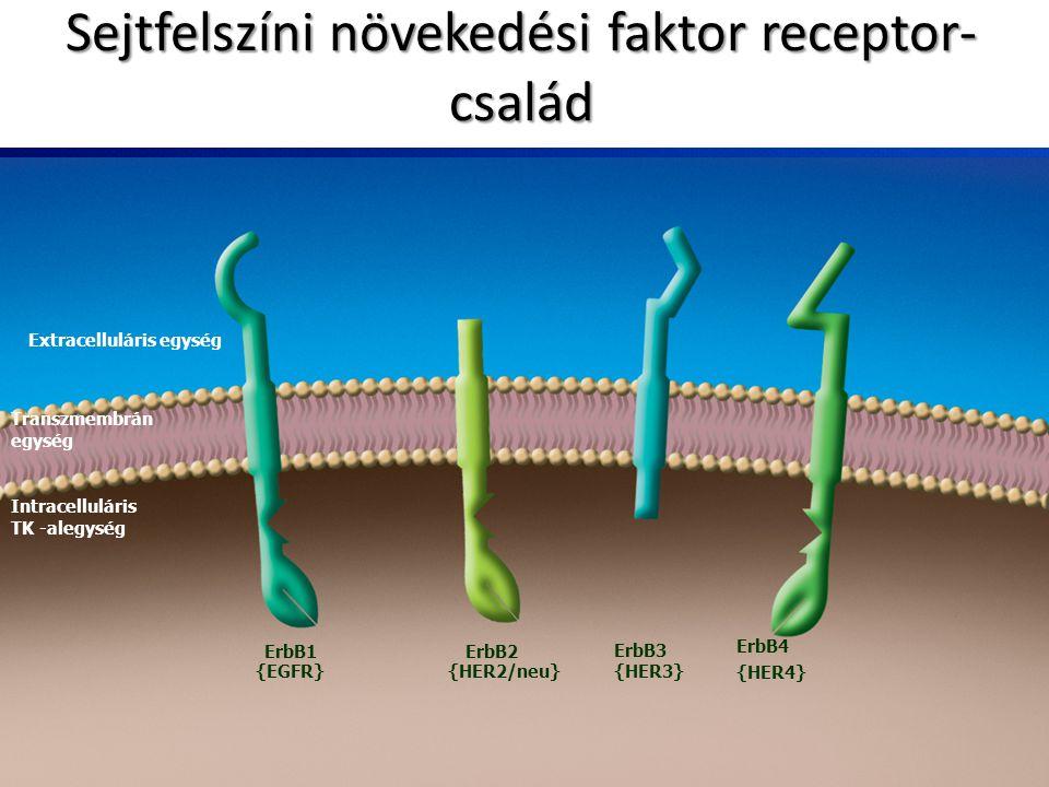 Sejtfelszíni növekedési faktor receptor-család