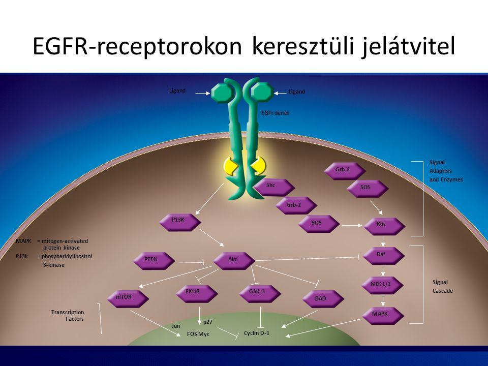 EGFR-receptorokon keresztüli jelátvitel