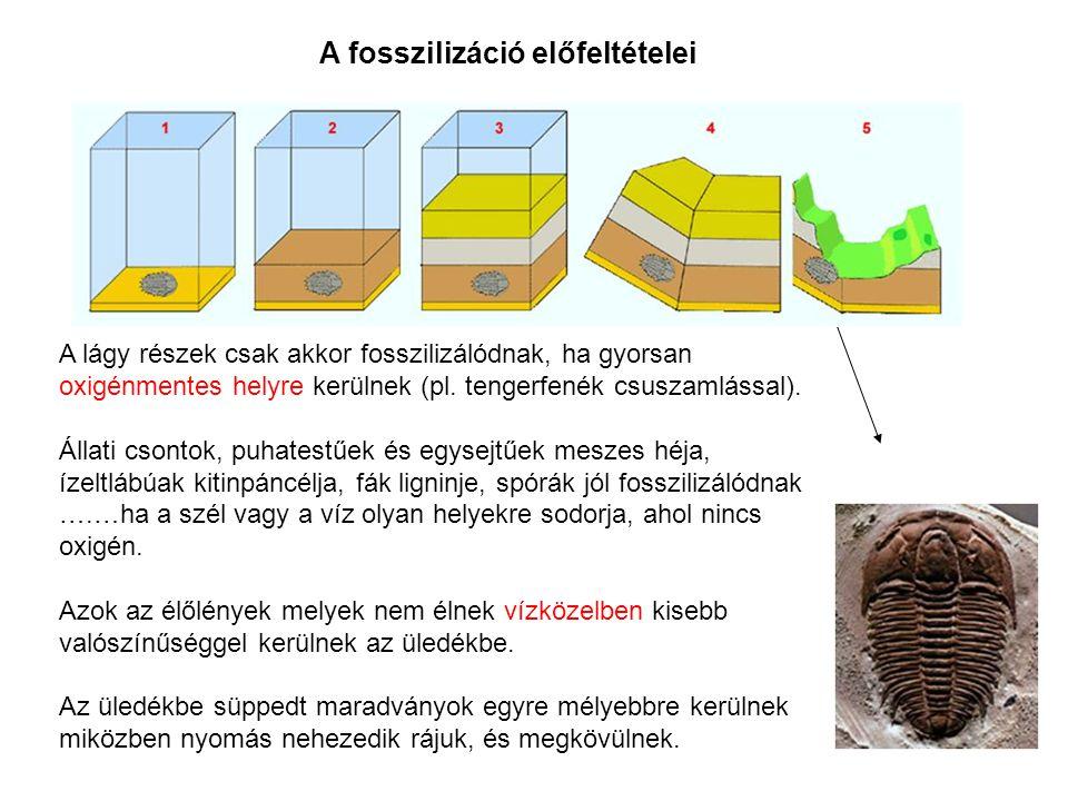 A fosszilizáció előfeltételei