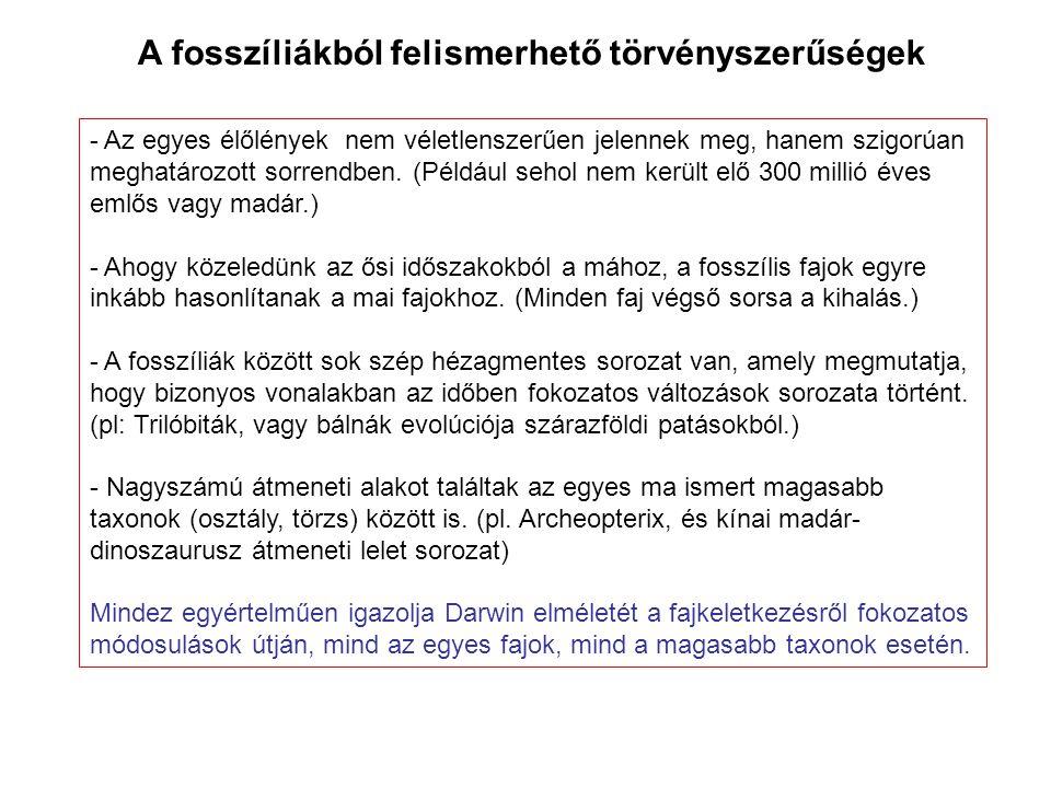 A fosszíliákból felismerhető törvényszerűségek