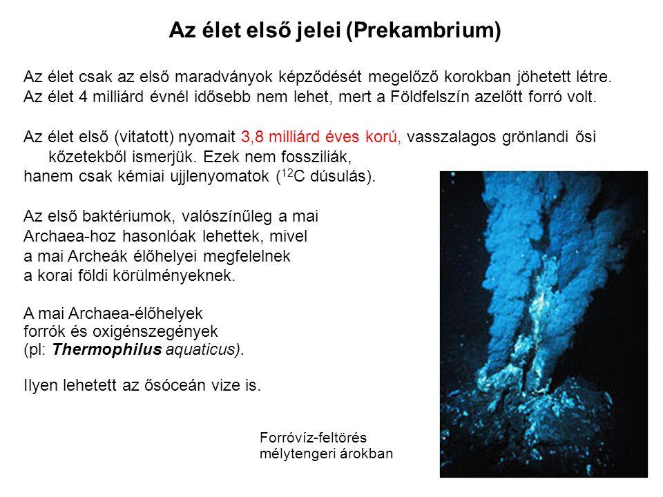Az élet első jelei (Prekambrium)