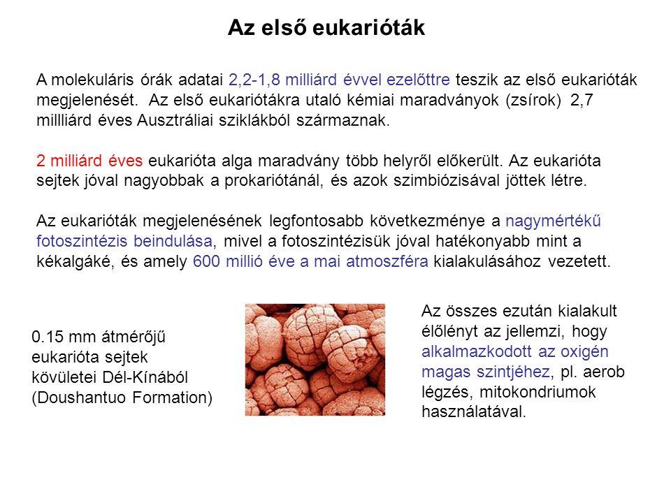 Az első eukarióták