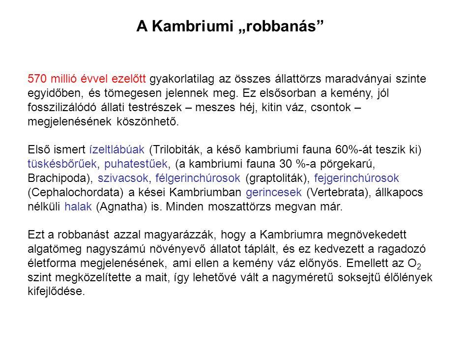 """A Kambriumi """"robbanás"""