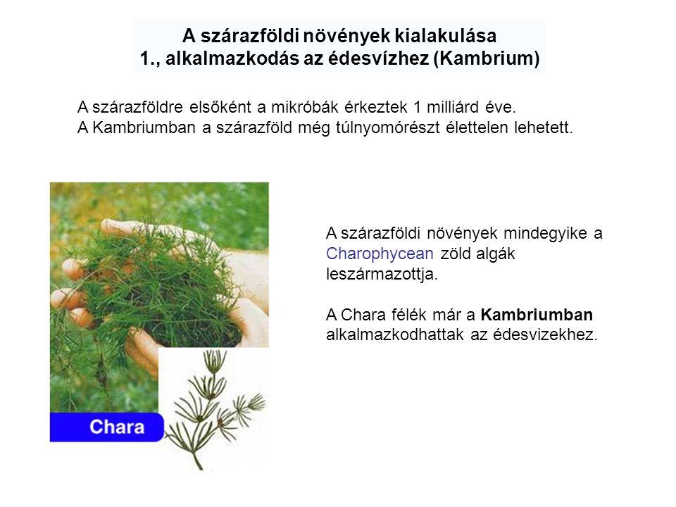A szárazföldi növények kialakulása