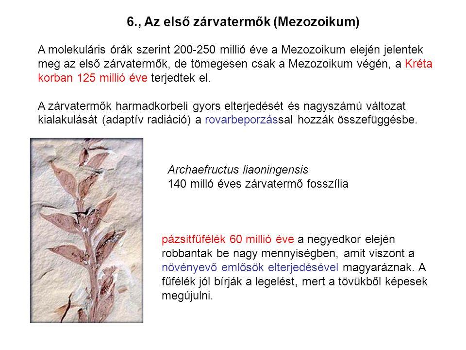 6., Az első zárvatermők (Mezozoikum)