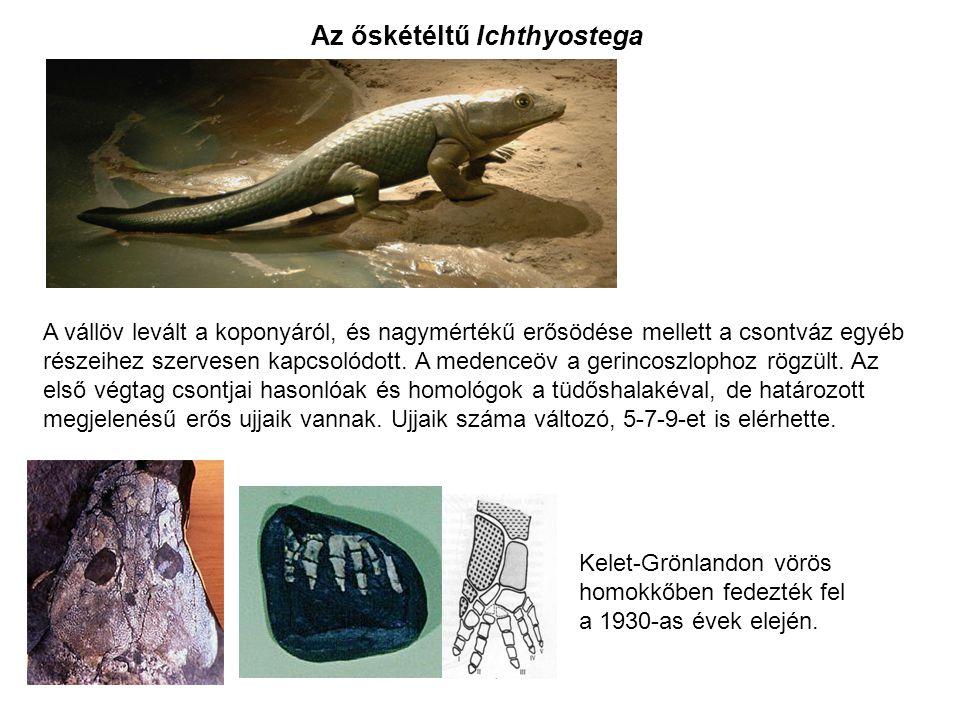 Az őskétéltű Ichthyostega