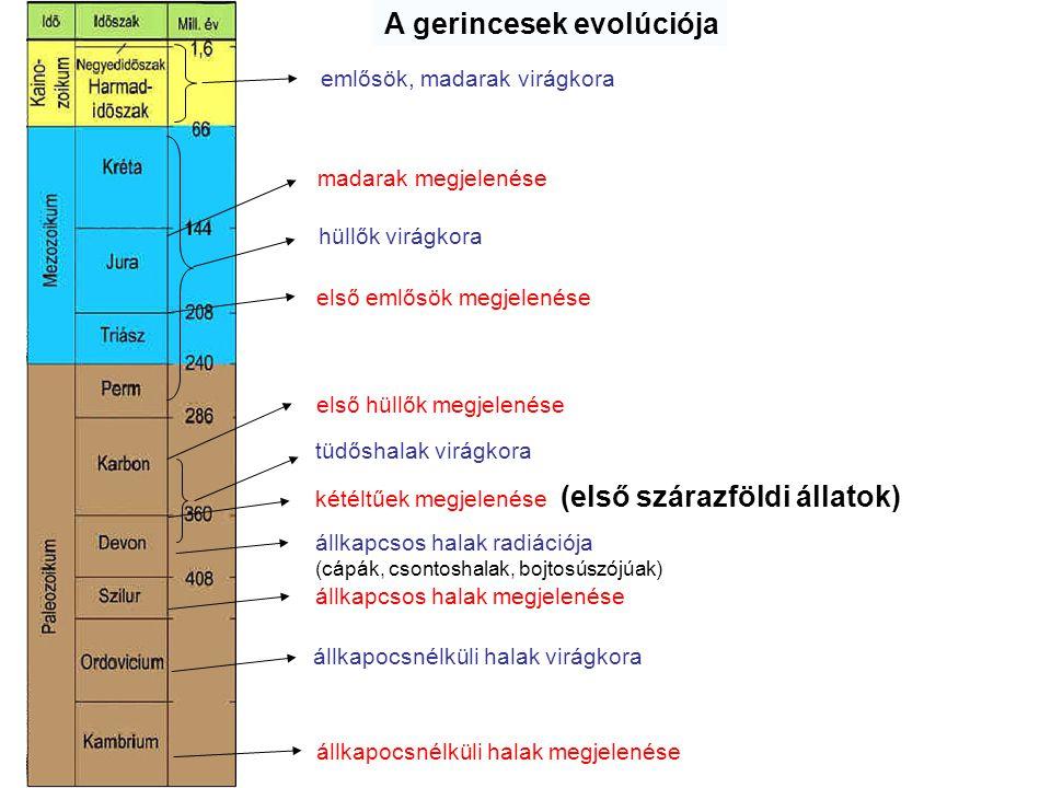 A gerincesek evolúciója