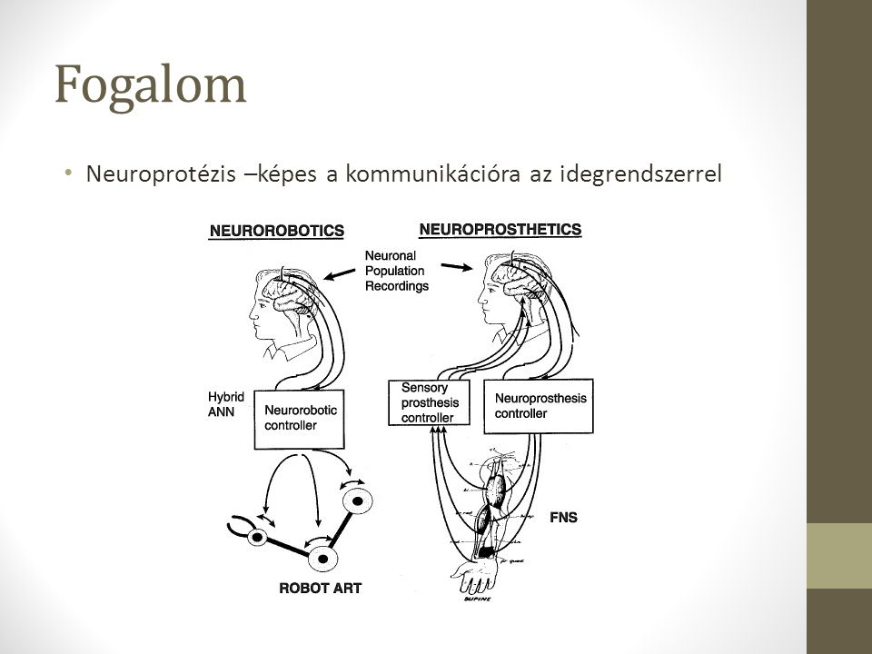 Fogalom Neuroprotézis –képes a kommunikációra az idegrendszerrel