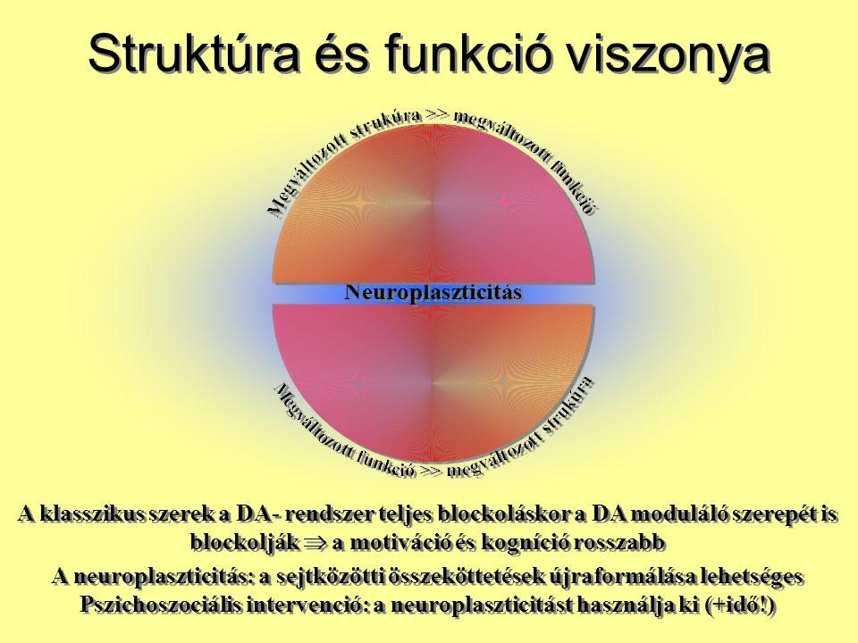 Struktúra és funkció viszonya
