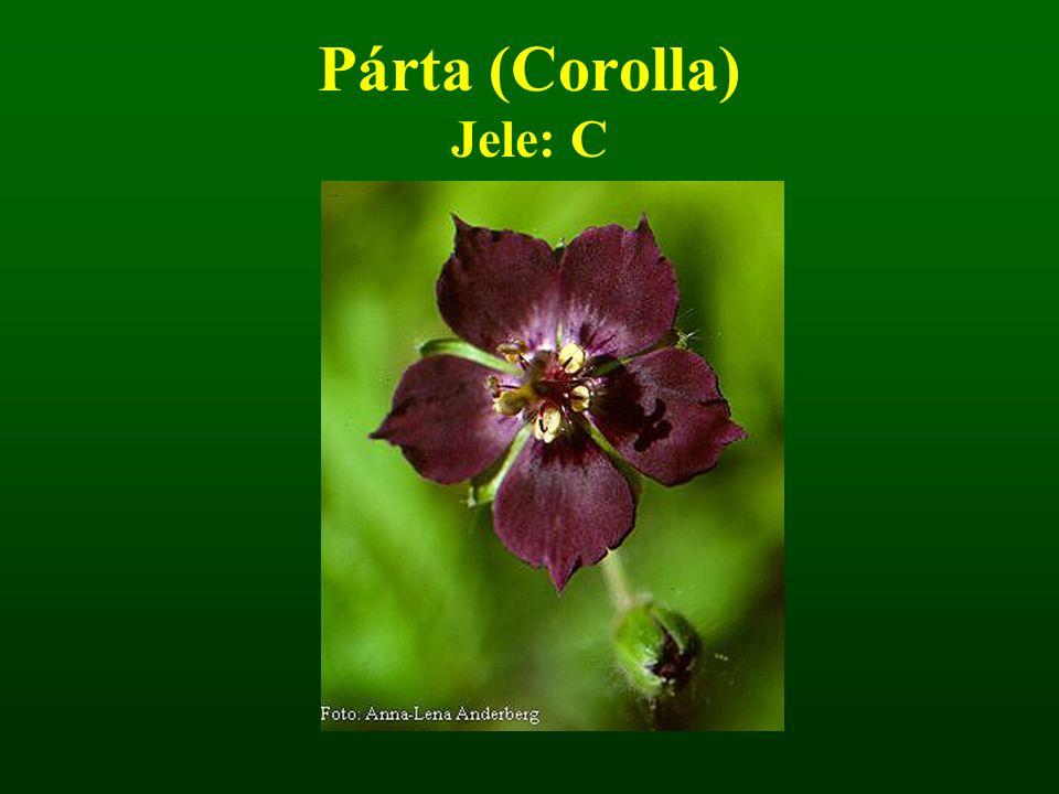 Párta (Corolla) Jele: C