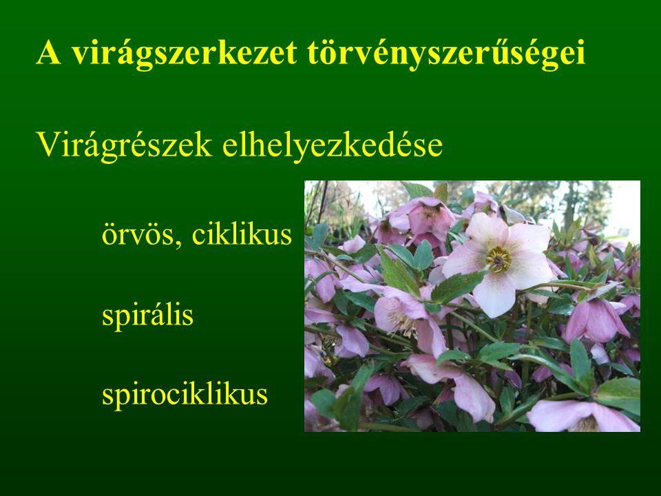 A virágszerkezet törvényszerűségei Virágrészek elhelyezkedése