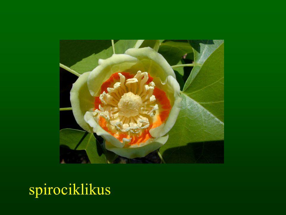 spirociklikus