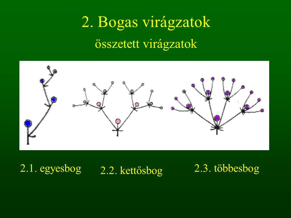 2. Bogas virágzatok összetett virágzatok