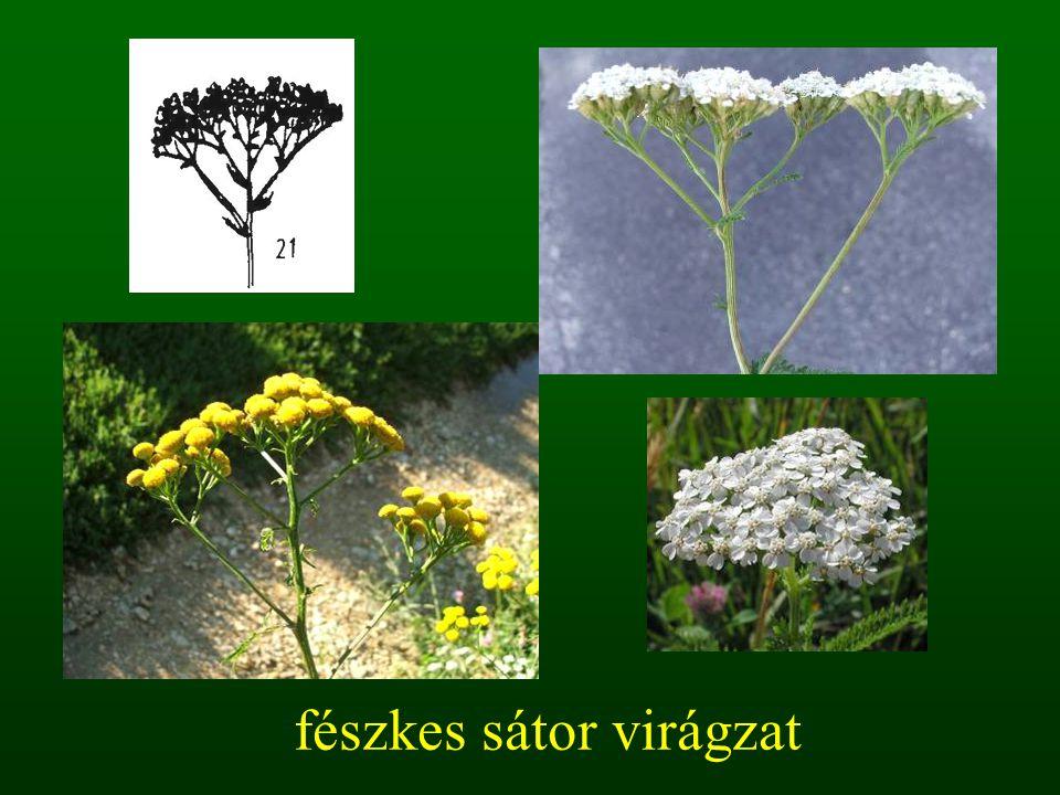 fészkes sátor virágzat