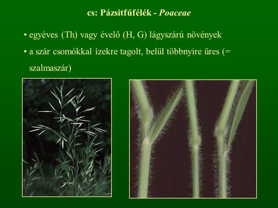 cs: Pázsitfűfélék - Poaceae