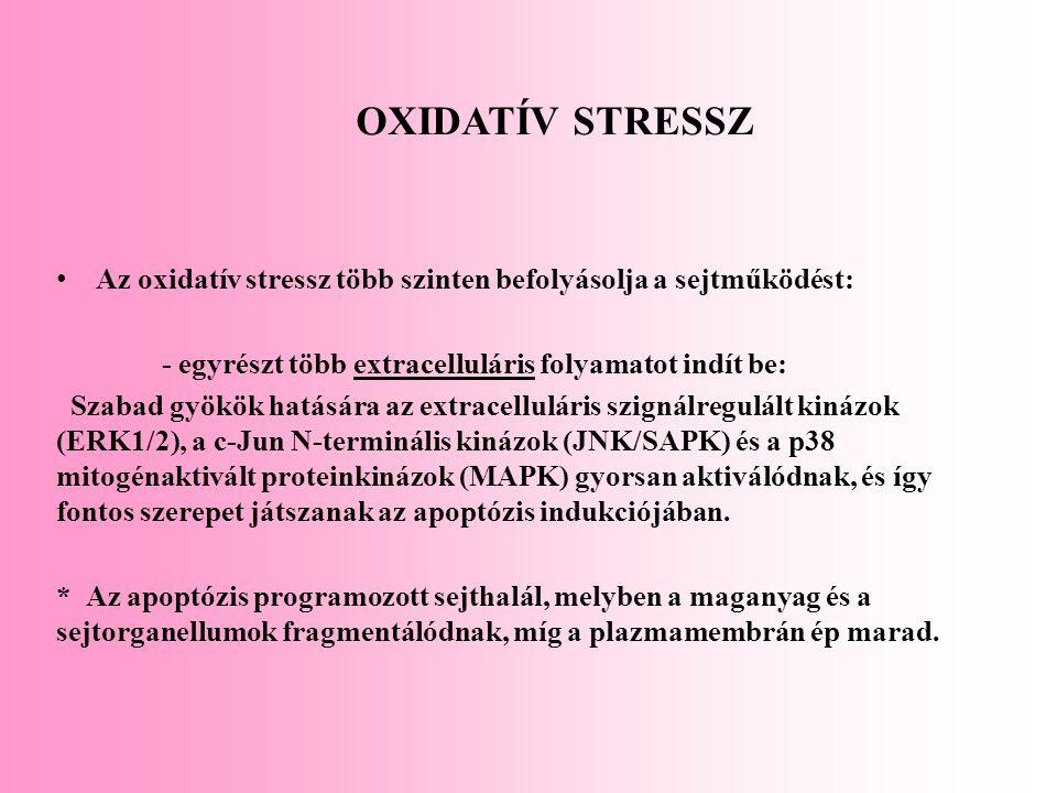 OXIDATÍV STRESSZ Az oxidatív stressz több szinten befolyásolja a sejtműködést: - egyrészt több extracelluláris folyamatot indít be: