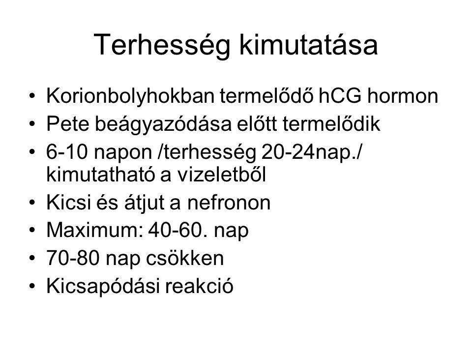Terhesség kimutatása Korionbolyhokban termelődő hCG hormon