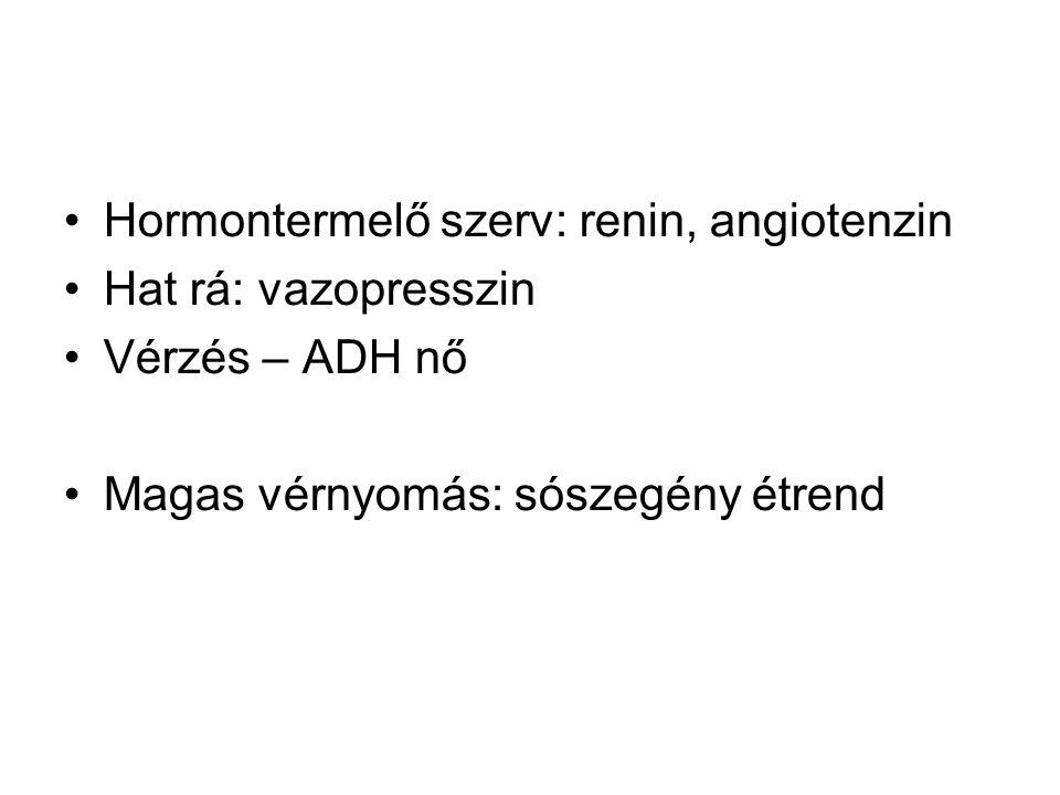 Hormontermelő szerv: renin, angiotenzin